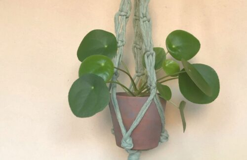 Plant Hanger Macramè Fai Da te